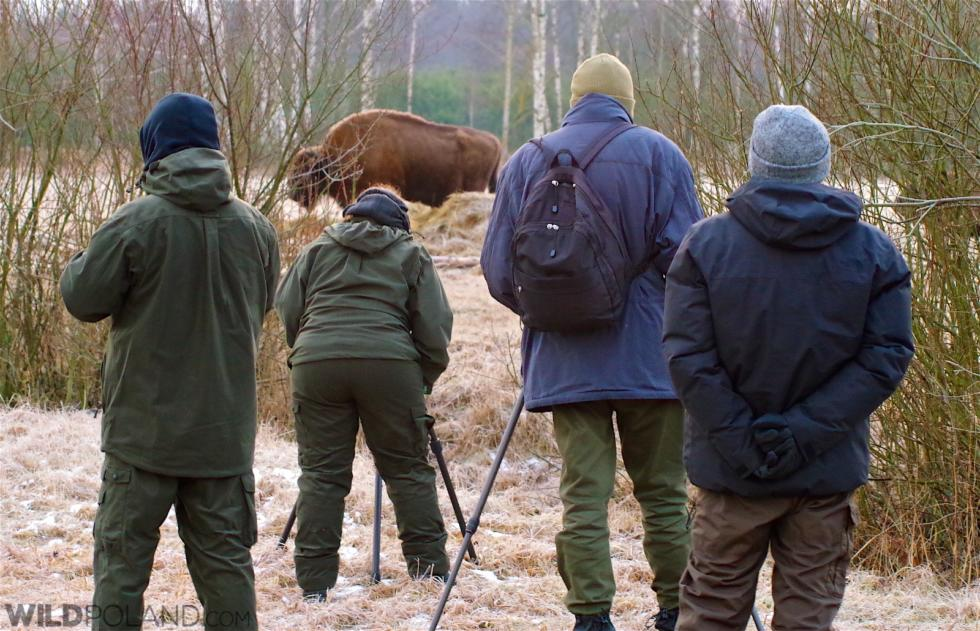Winter Bison Safari & Wolf Tracking – Feb 2016