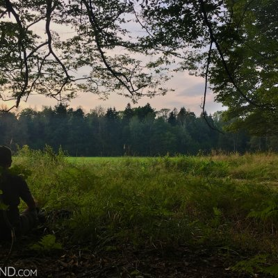 Waiting For Bison In The Białowieża Forest