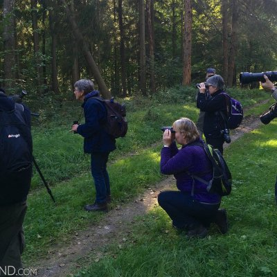 Photographing Wild European Bison In The Białowieża Forest