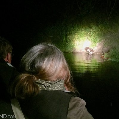 Watching Beavers On Wild Poland Boat Cruise