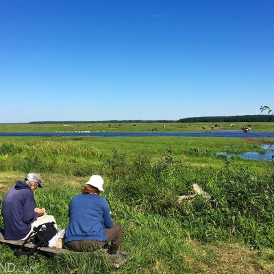Lunching In The Biebrza Marshes