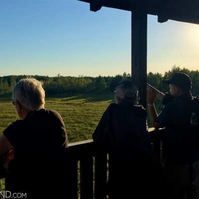 Watching Elks At Sunset In The Biebrza Marshes