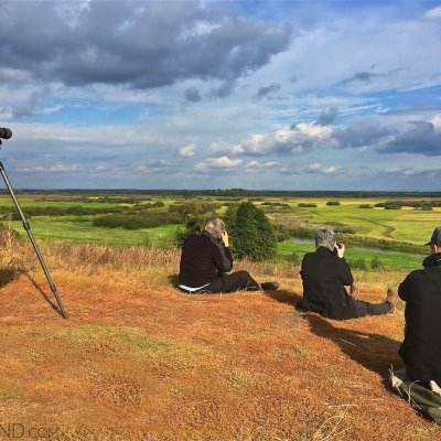Looking For Elks (Moose In The Biebrza Marshes