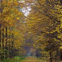 Białowieża Forest In Autumn