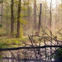 Białowieża Forest At Dawn By Łukasz Mazurek