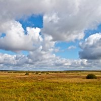Autumn View In The Biebrza Marshes