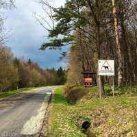 Watch Out For Lynx Crossing Sign In The Eastern Carpathians