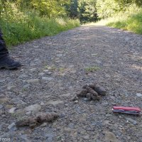 Wolf Evidence In The Bieszczady Mountains