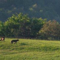 Wolves In The Eastern Carpathians By Zenon Wojtas