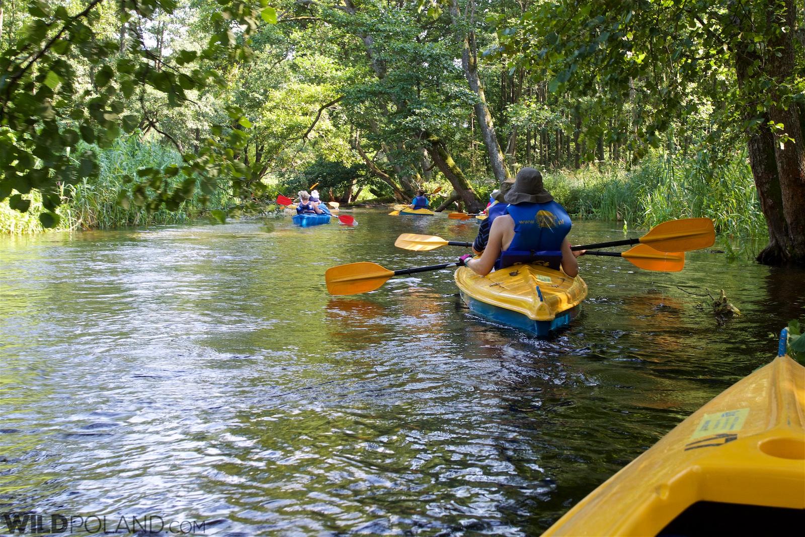 Kayaking on the Czarna Hańcza River