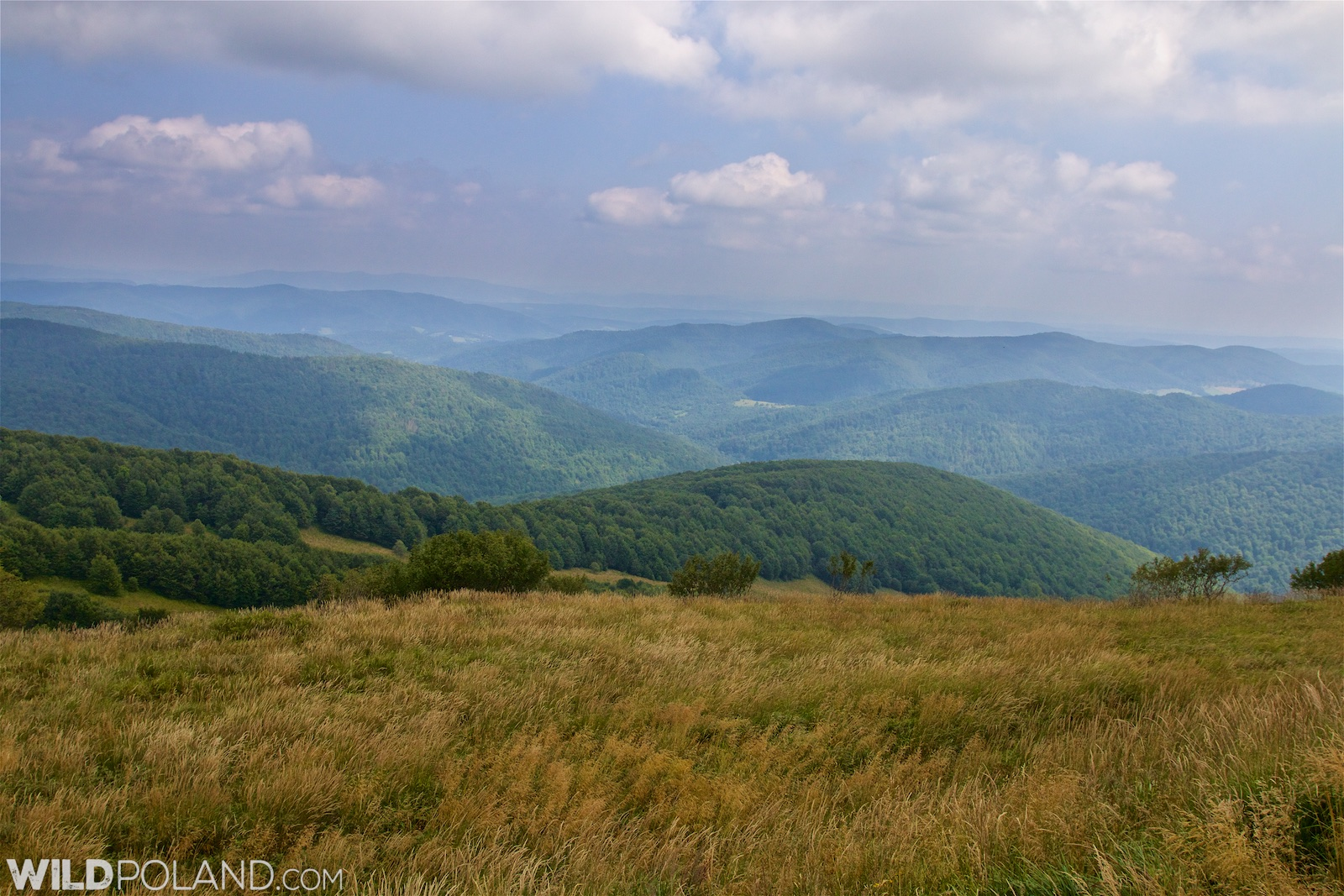 In the Bieszczady Mountains