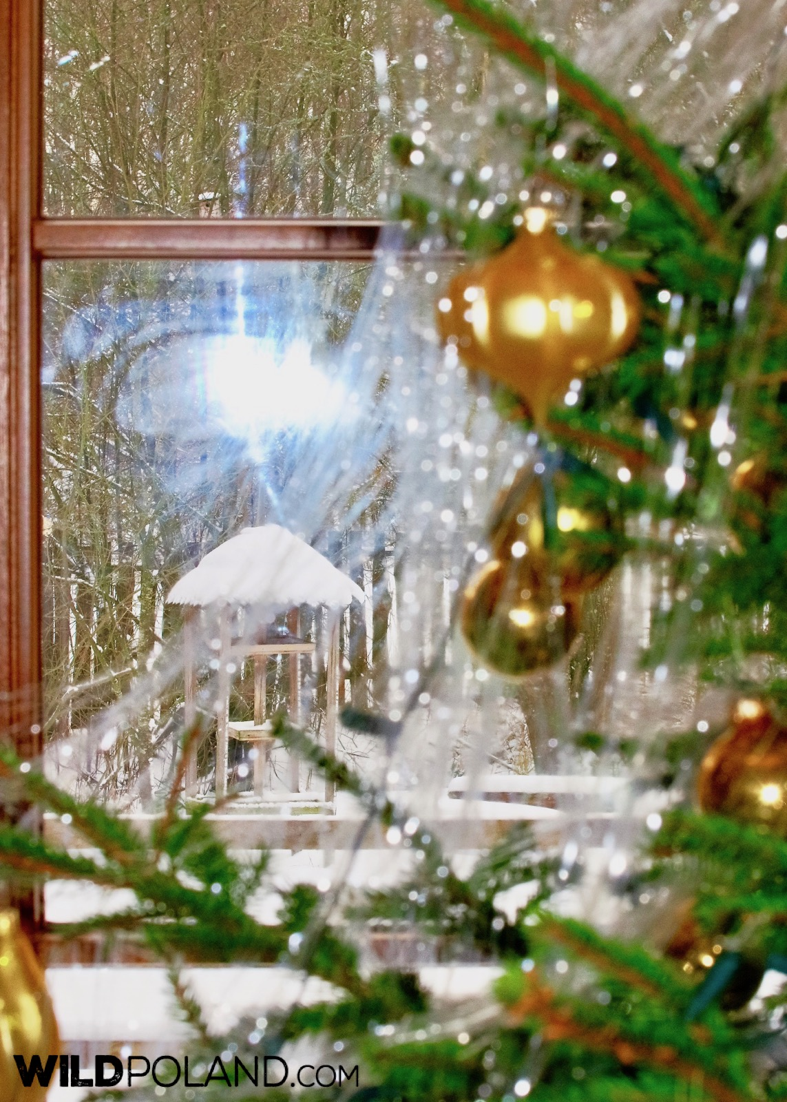 Christmas time at our cosy guesthouse, Wejmutka, photo by Andrzej Petryna