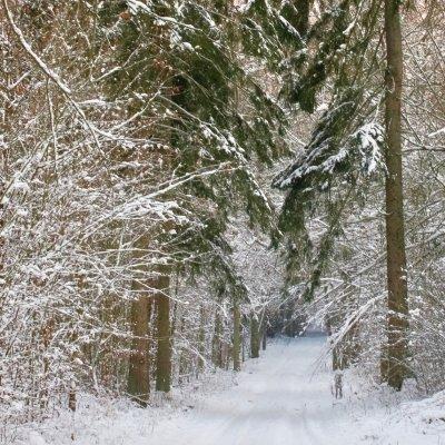 Winter Scenery At Białowieża Forest, Photo By Andrzej Petryna