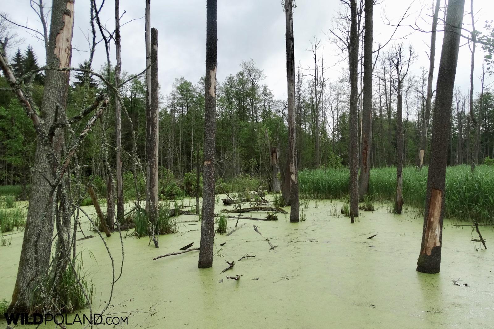Białowieża Forest diversity, photo by Piotr Dębowski