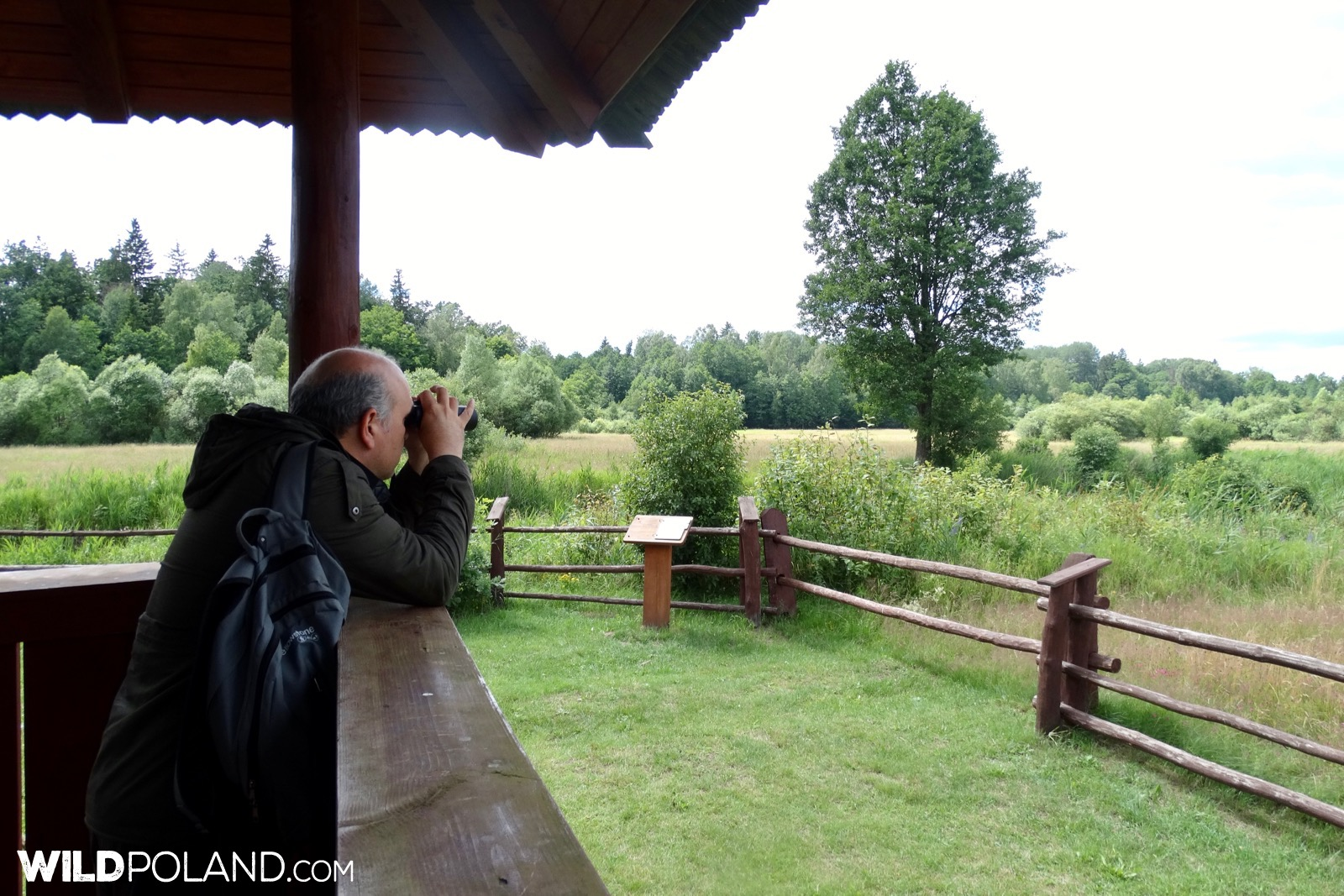Wildlife watching with Wild Poland, photo by Piotr Dębowski