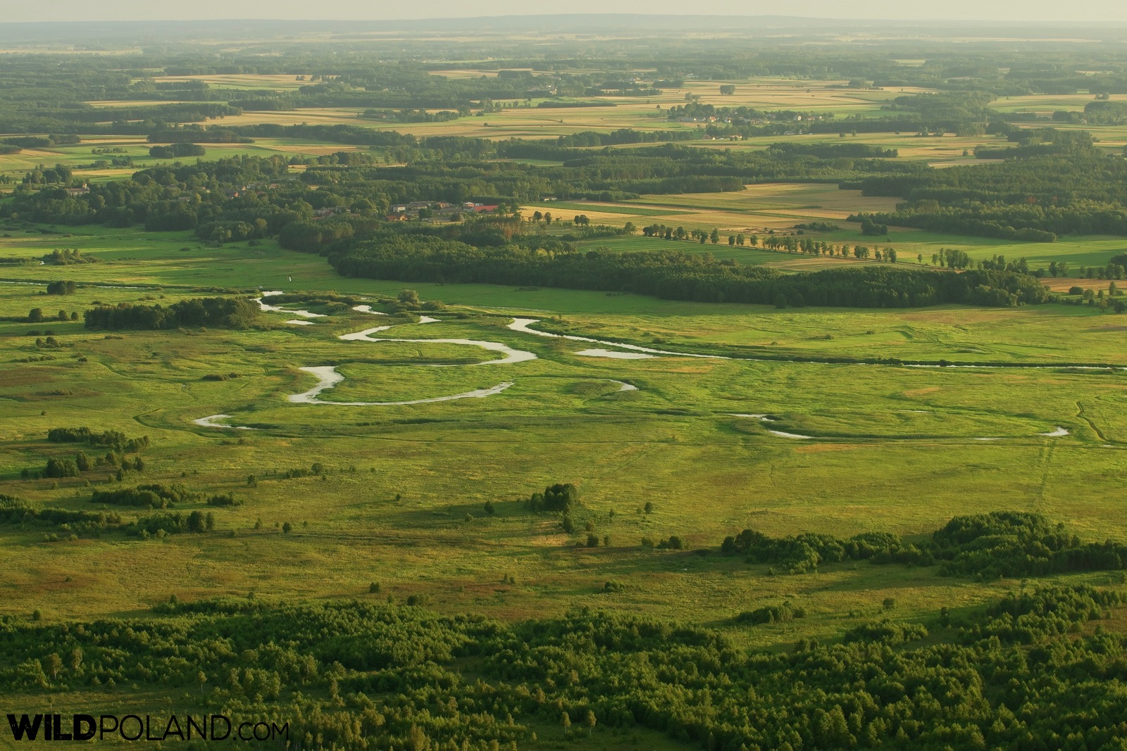 Balloon adventure with Wild Poland, flight over Biebrza Marshes, photo by Andrzej Petryna