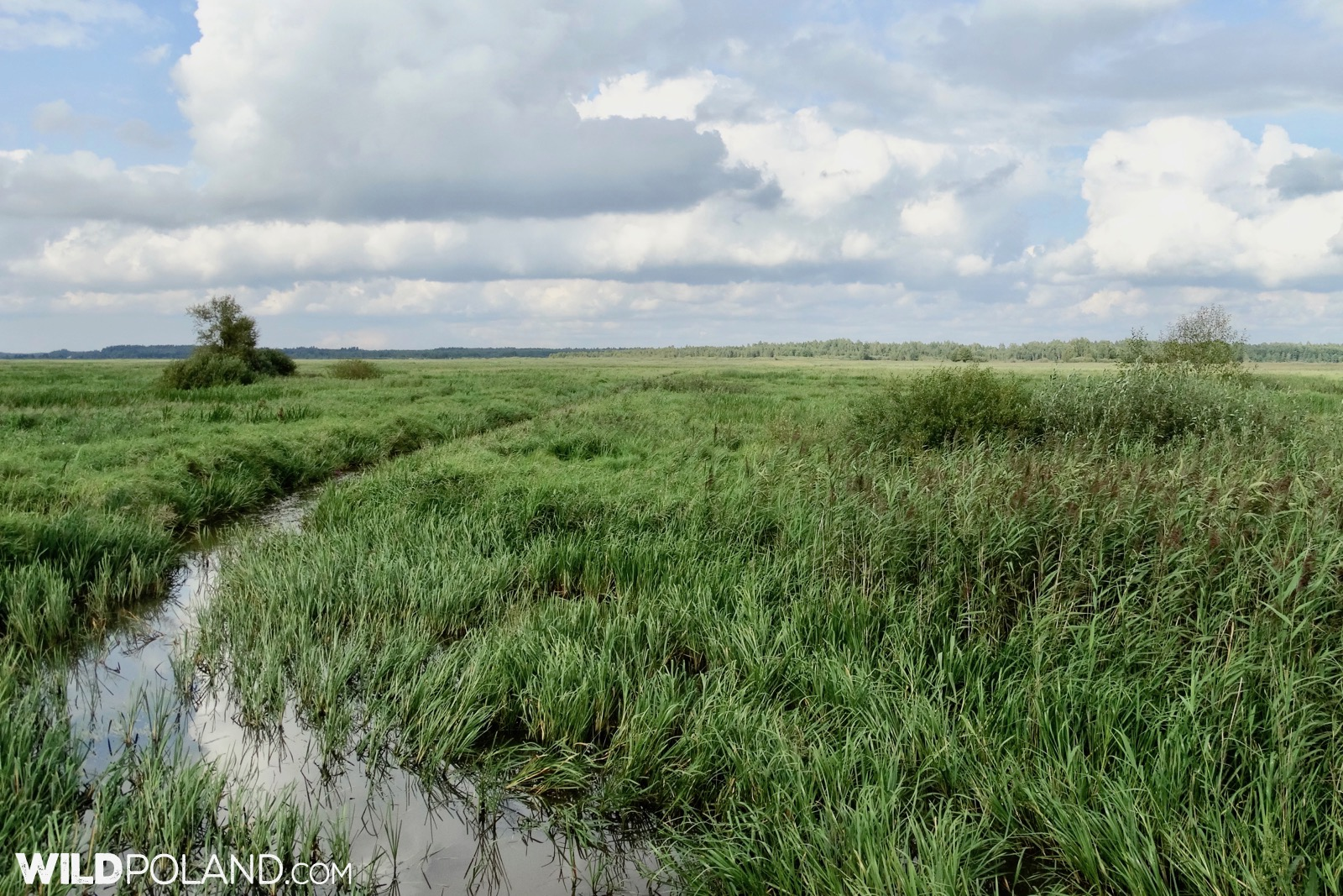 Biebrza Marshes landscape at summertime, photo by Piotr Dębowski