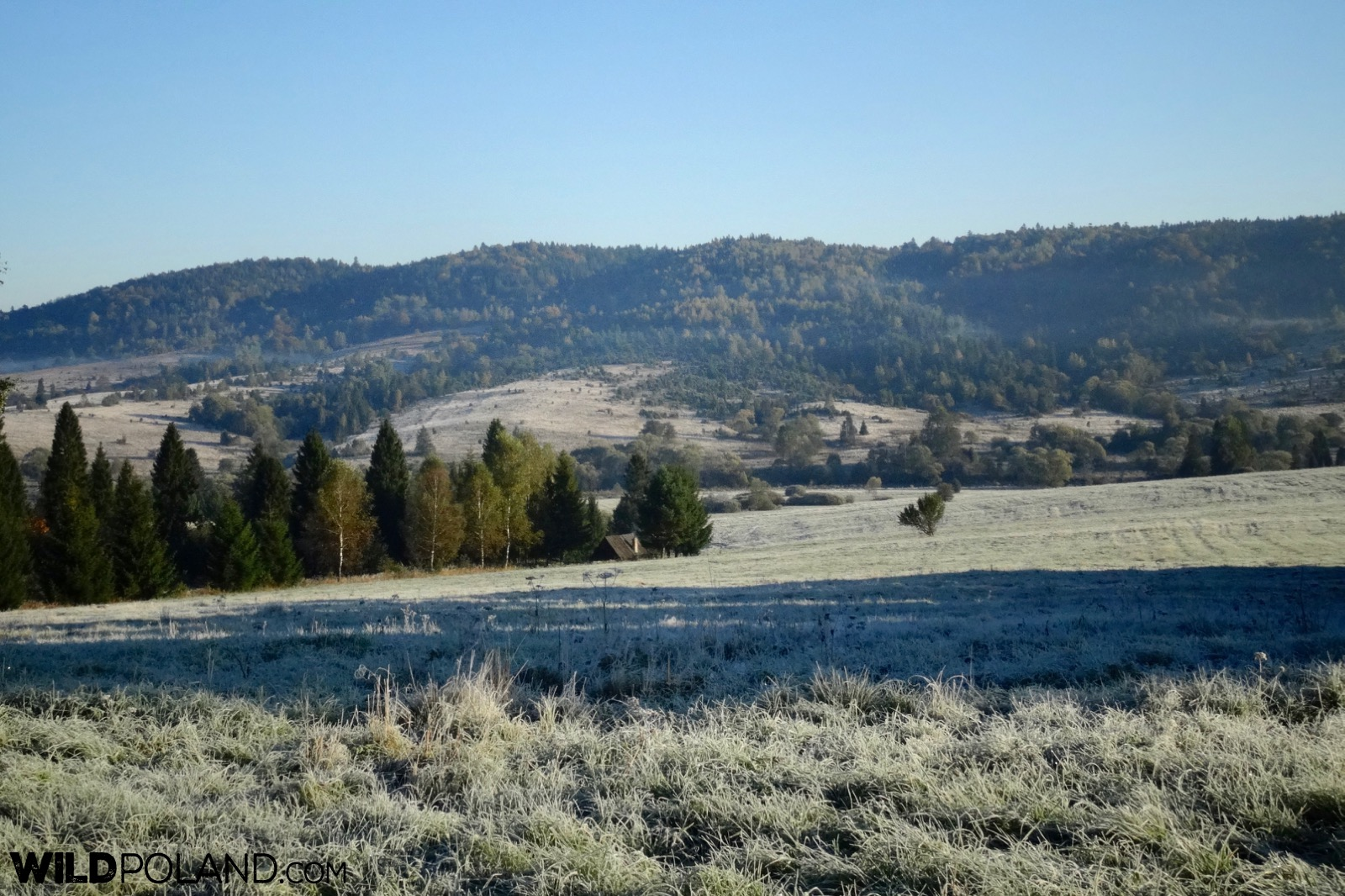 Frosty morning in Bieszczady Mountains, our guided Eastern Carpathians tour in September, photo by Piotr Dębowski