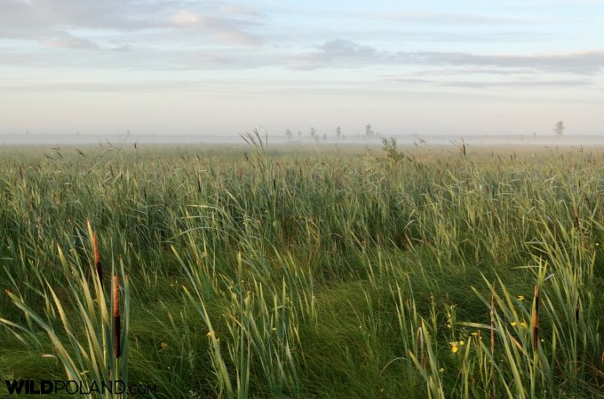 Primeval Forest And Marshes Guided Tour, Jul 2017