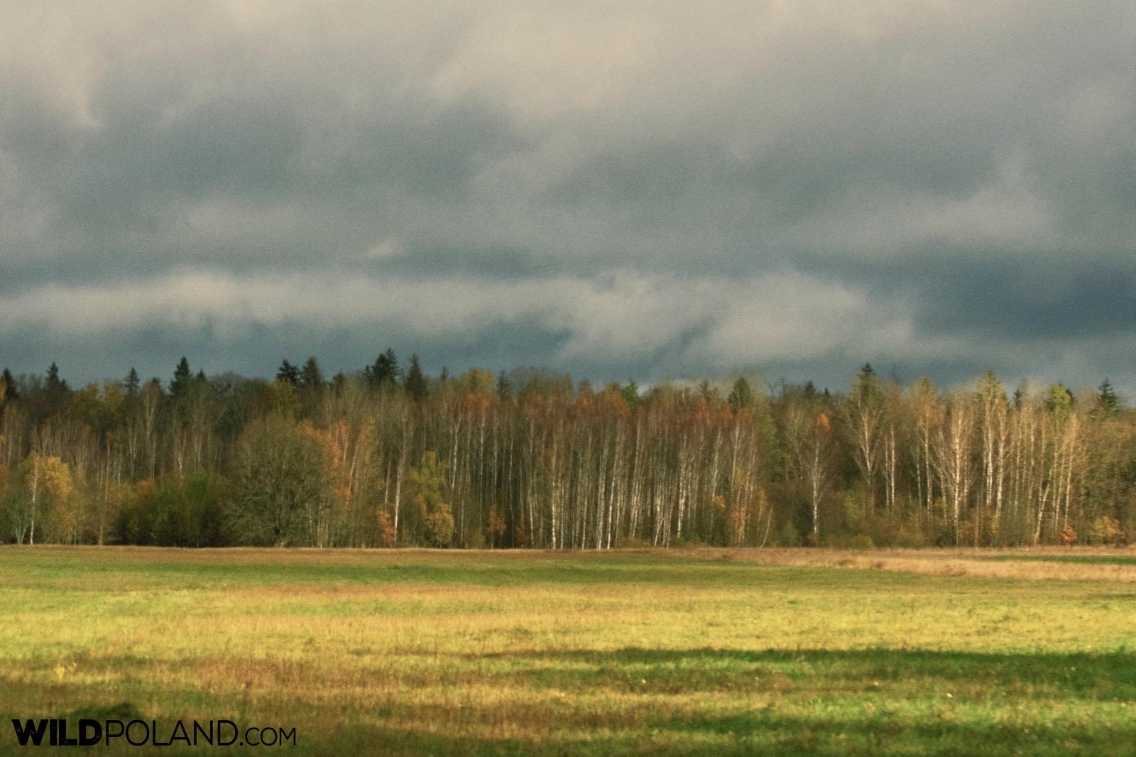 Autumn aspect of Białowieża Forest, photo by Andrzej Petryna