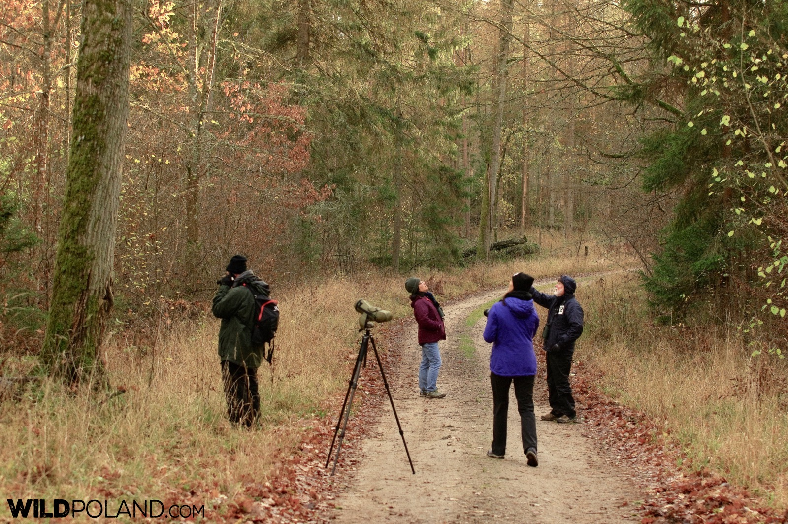 Birdwatching with Wild Poland in the Białowieża Forest, photo by Andrzej Petryna