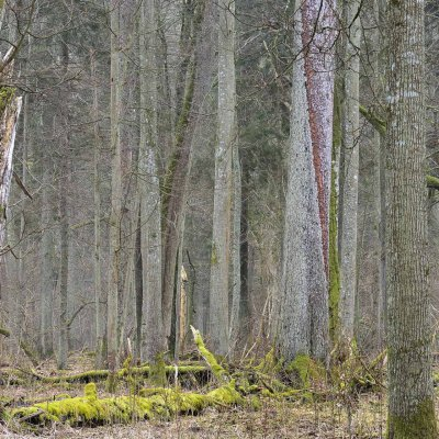 Białowieża Forest In Late Autumn, Photo By Frederic Demeuse