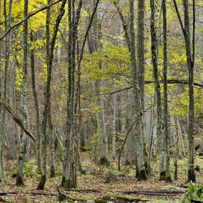 Białowieża Forest In Autumn, Photo By Frederic Demeuse
