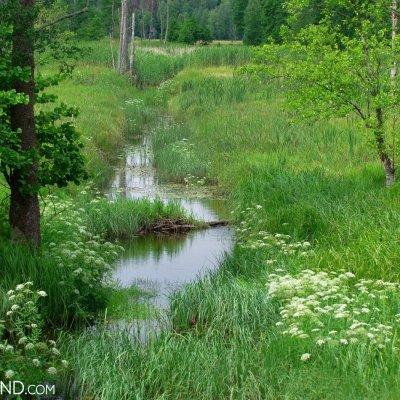 Narewka River In Białowieża, Photo By Andrzej Petryna