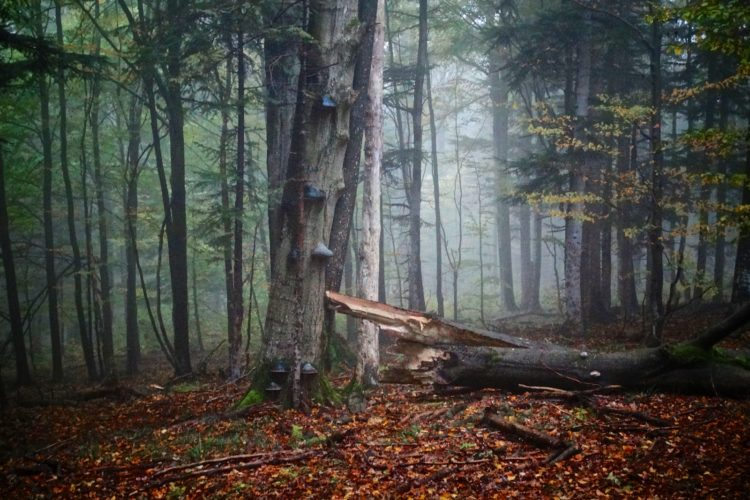 Misty Carpathian Forest In Bieszczady Mountains, Our Guided Eastern Carpathians Tour In September, Photo By Piotr Dębowski