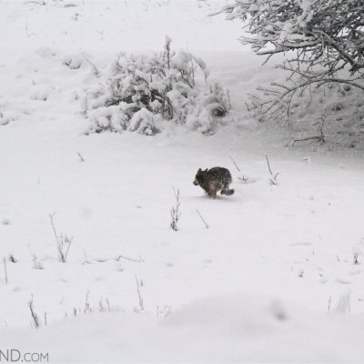 Wolf Seen On Our Tour In The Eastern Carpathians. Photo By Murray Forbes