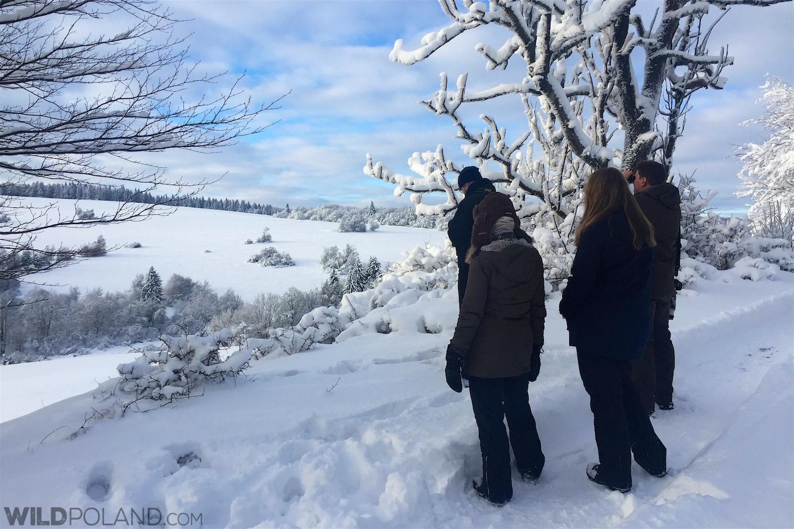 Scanning for wolves in Eastern Carpathians