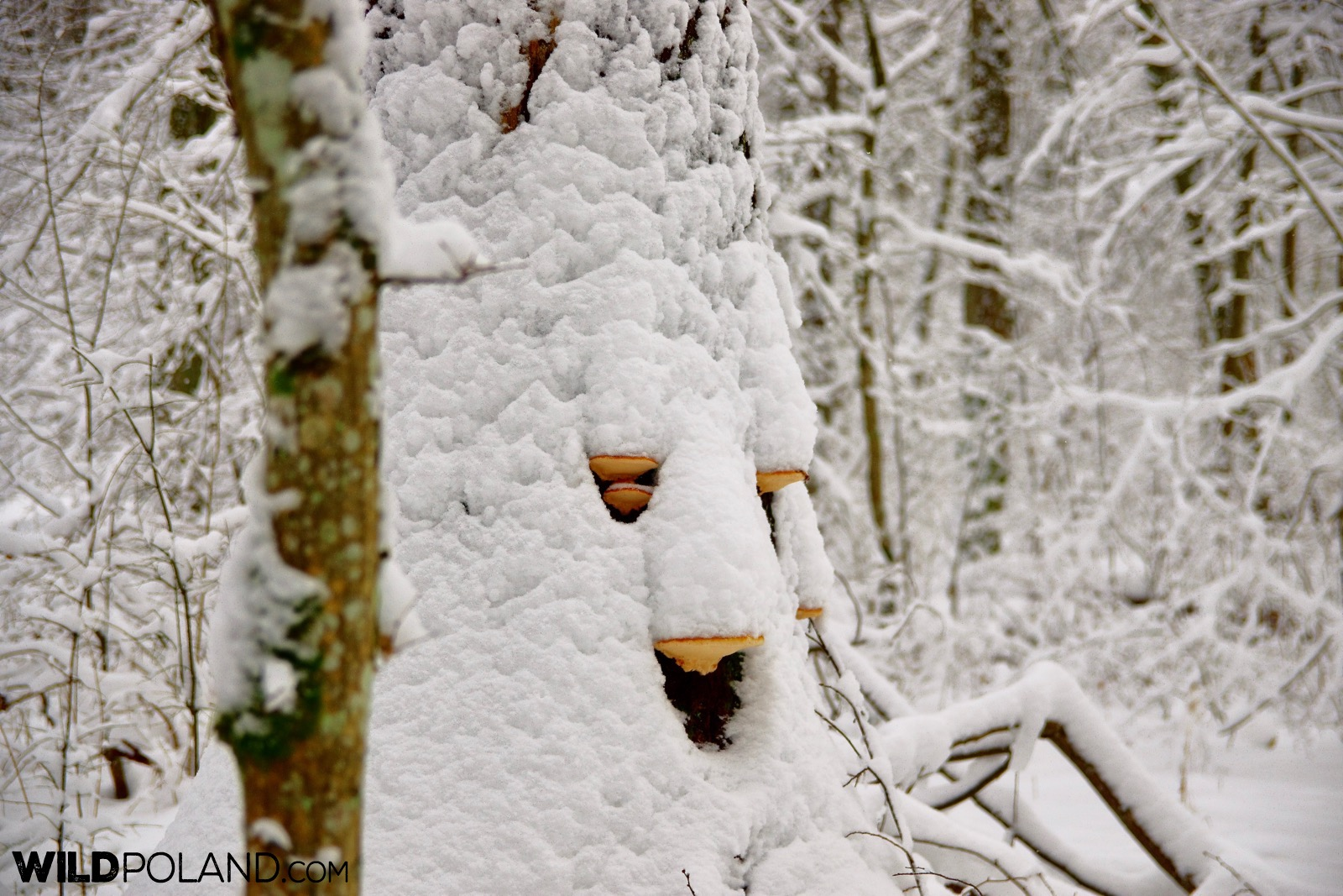 Winter in the Strict Protection Area of the Białowieża National Park, photo by Andrzej Petryna