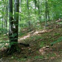 39 Bieszczady National Park Wildpoland Tour Lukasz Mazurek