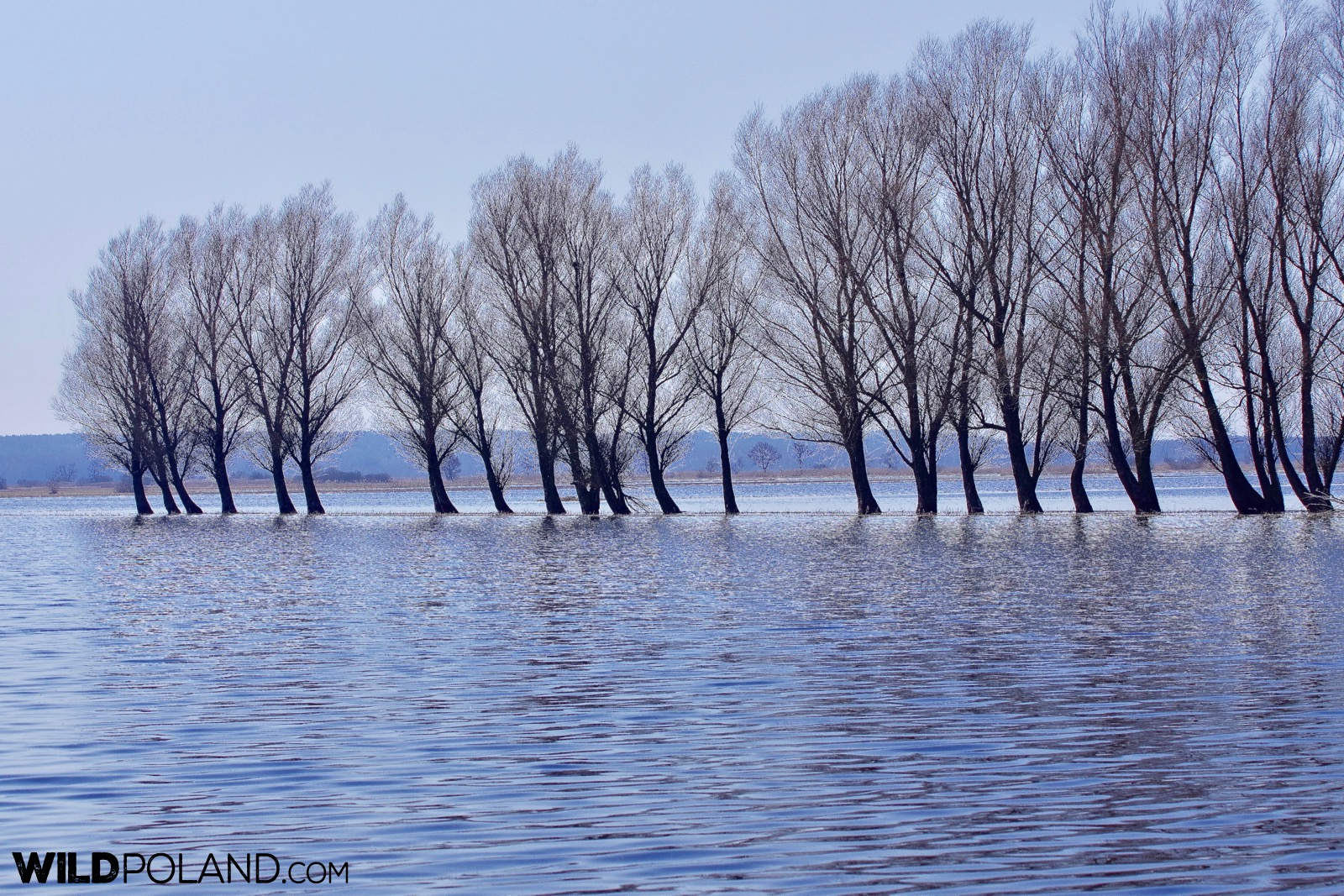 Spring and enxtensive floodings at the Biebrza Marshes, photo by Andrzej Petryna