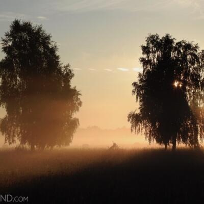 Bison Safari At Dawn, Photo By Marta Świtała