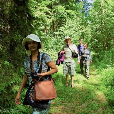 Wysokie Bagno Reserve, Białowieża Forest, Photo By Marta Świtała