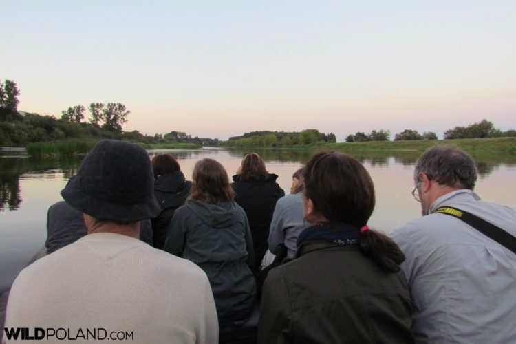 The Evening Beaver Boat Trip At The Biebrza Marshes With Wild Poland Crew, Photo By Bartosz Smyk