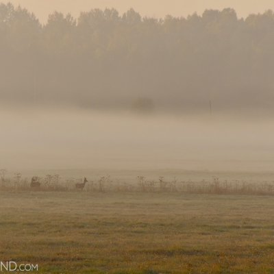 Misty Autumn Morning And Roe Deer At The Białowieża Forest Meadows, Photo By Andrzej Petryna