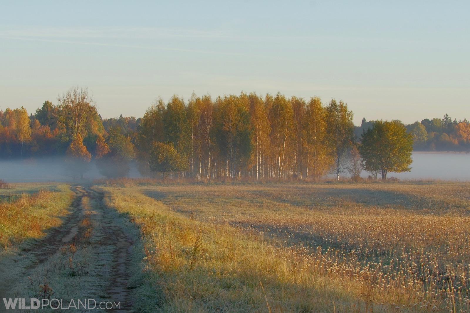 Misty meadows in the Białowieża Forest, photo by Andrzej Petryna