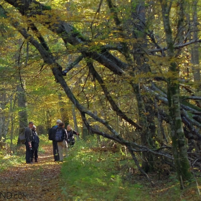 In The Strictly Protected Area Of The Białowieża NP, Photo By Andrzej Petryna