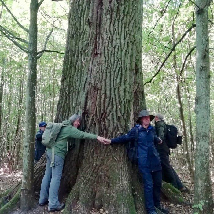 In The Białowieża Forest, Photo By Marta Świtała