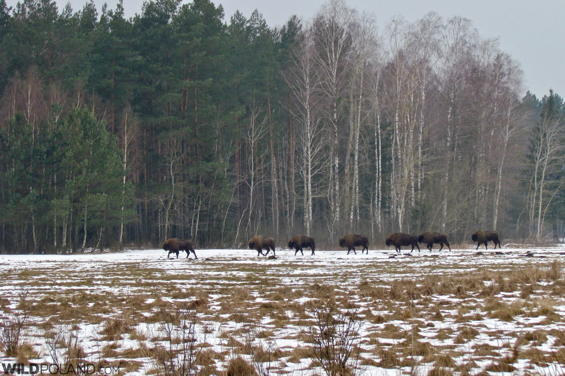 one of the herds seen during our tour