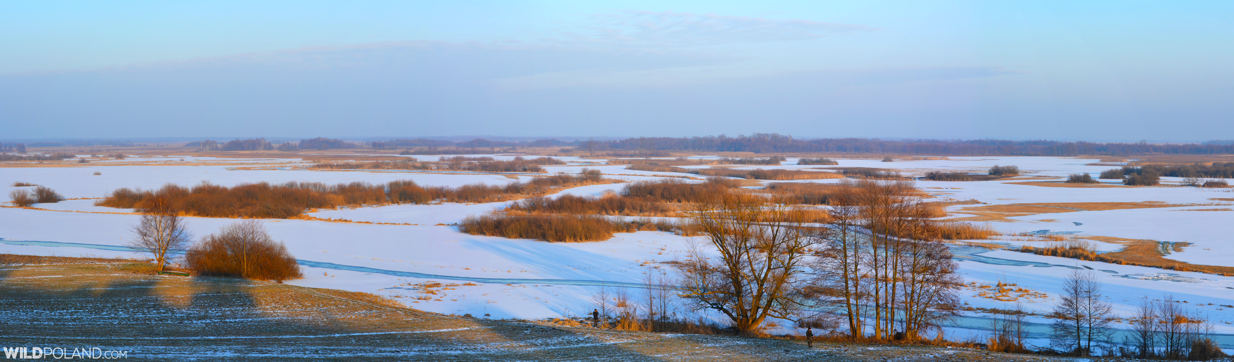 The view of the Biebrza Marshes at wintertime