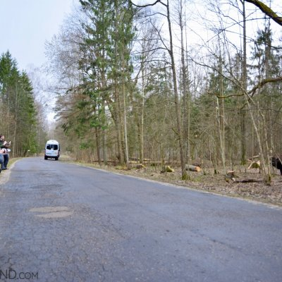 Bison Patrol In The Białowieża Forest, Photo Michał Skierczyński