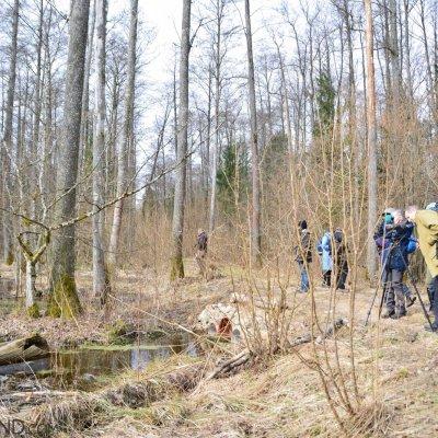 Daily Walks In The Białowieża Forest, Photo By Michał Skierczyński