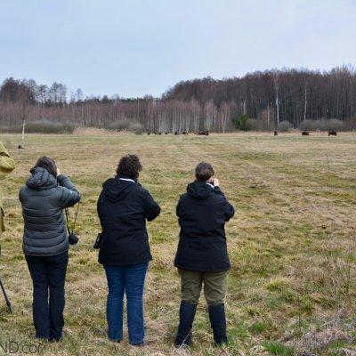 Herd Of Bison In The North Part Of The Białowieża Forest, Photo By Michał Skierczyński