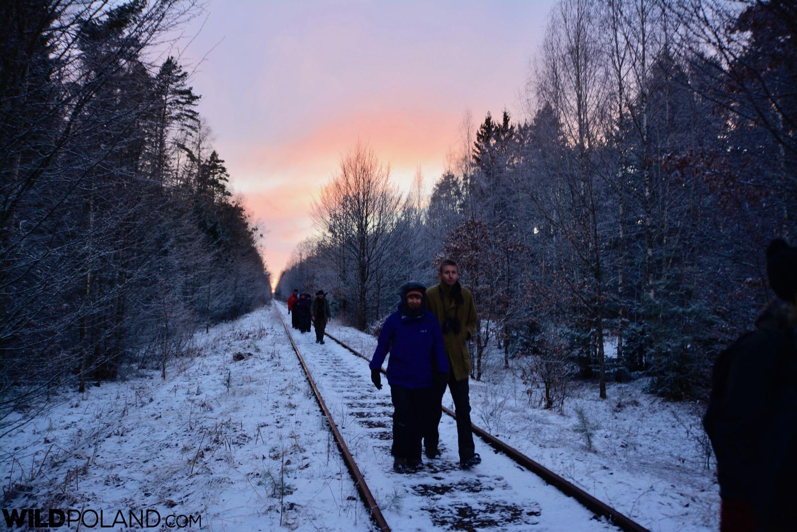 Snowy day in the Białowieża Forest, photo by Michał Skierczyński