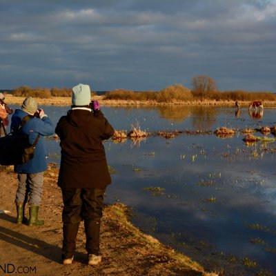 Watching Elk (Moose) At The Biebrza Marshes, Photo By Michał Skierczyński