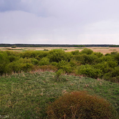 View Over Biebrza Marshes In The Evening