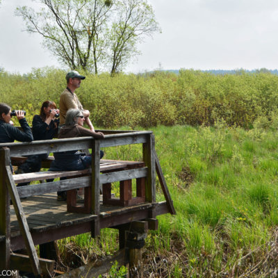 Birdwatching In The Biebrza Marshes